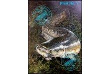 Catfish Print