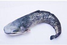 Catfish Pillow